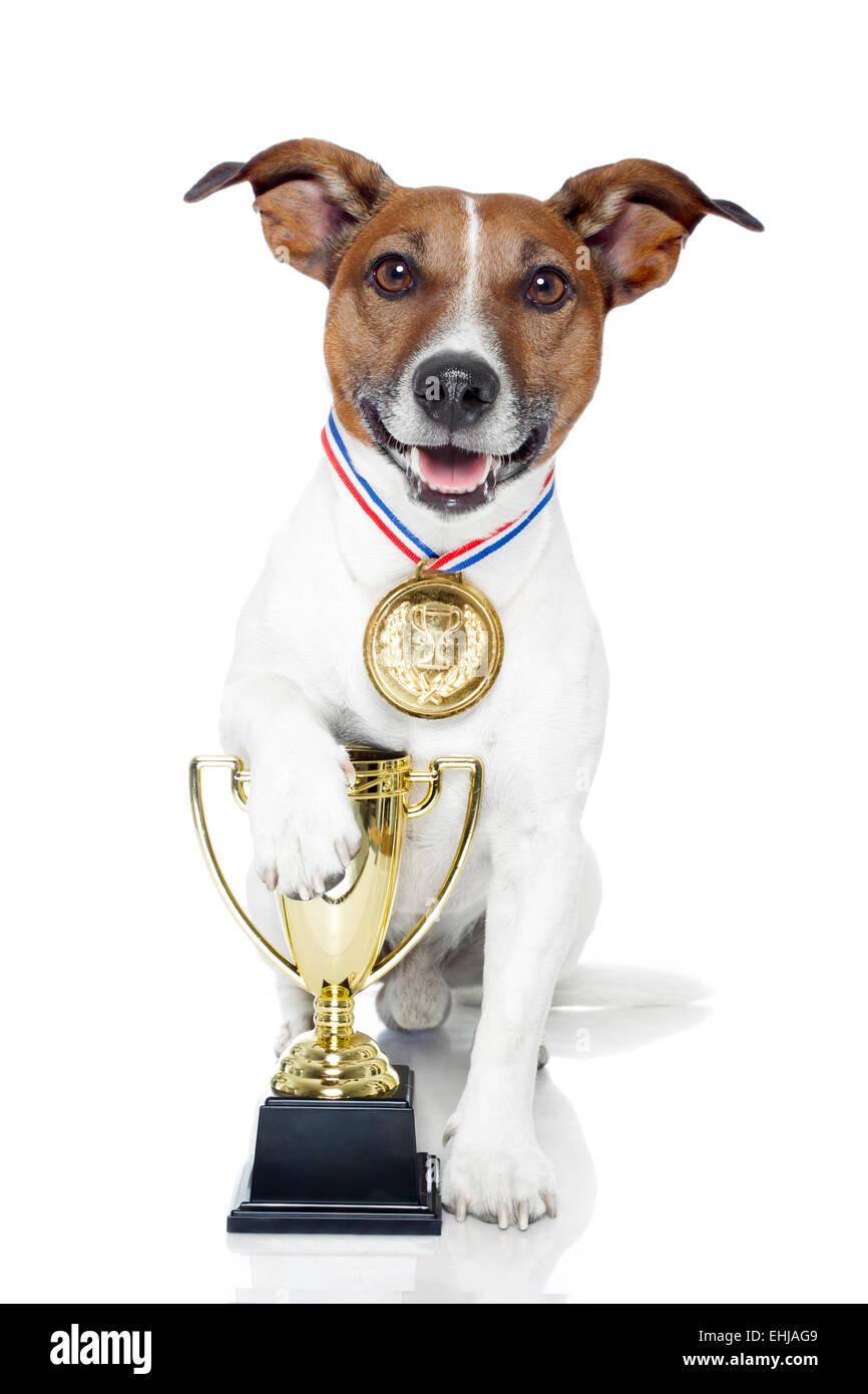 winner dog - Stock Image