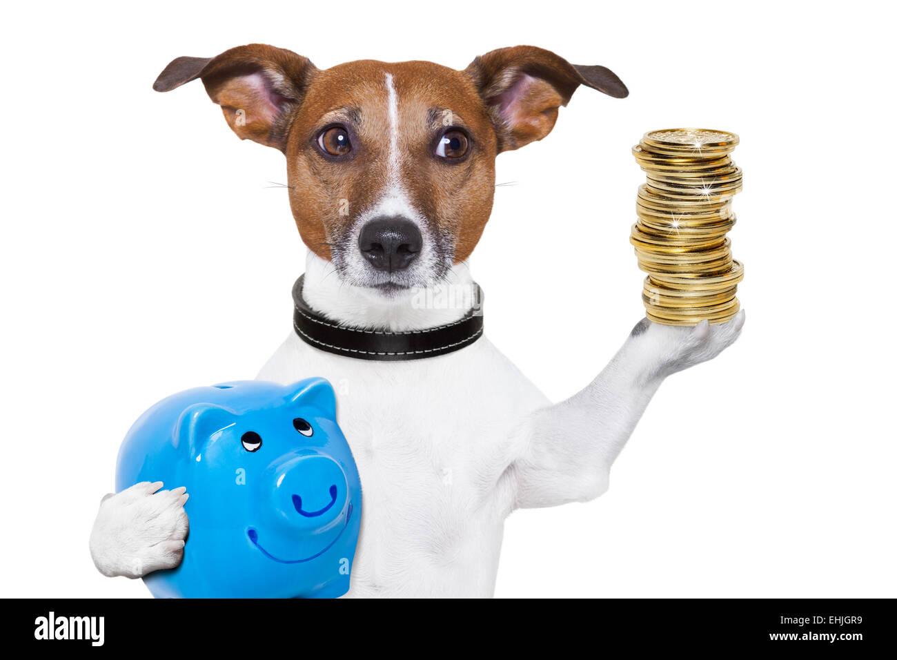 money saving dog - Stock Image