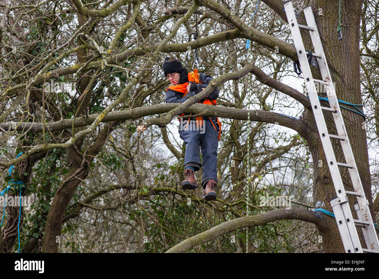 Bristol, UK. 14th Mar, 2015. A protester who is lowered by rope from a tree-top platform before being evicted from - Stock Image