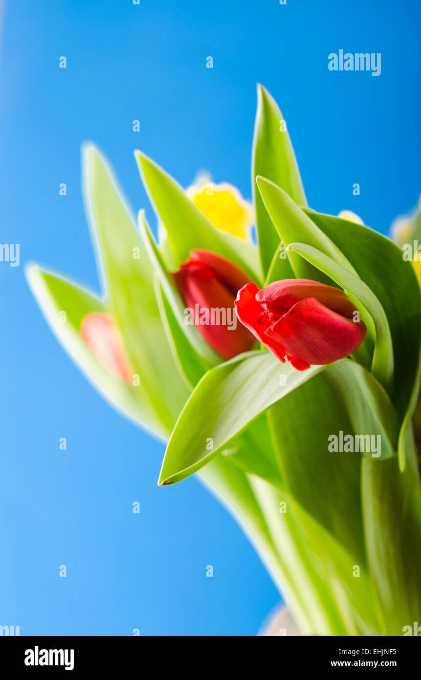 Spring bouquet with tulips - Stock Image