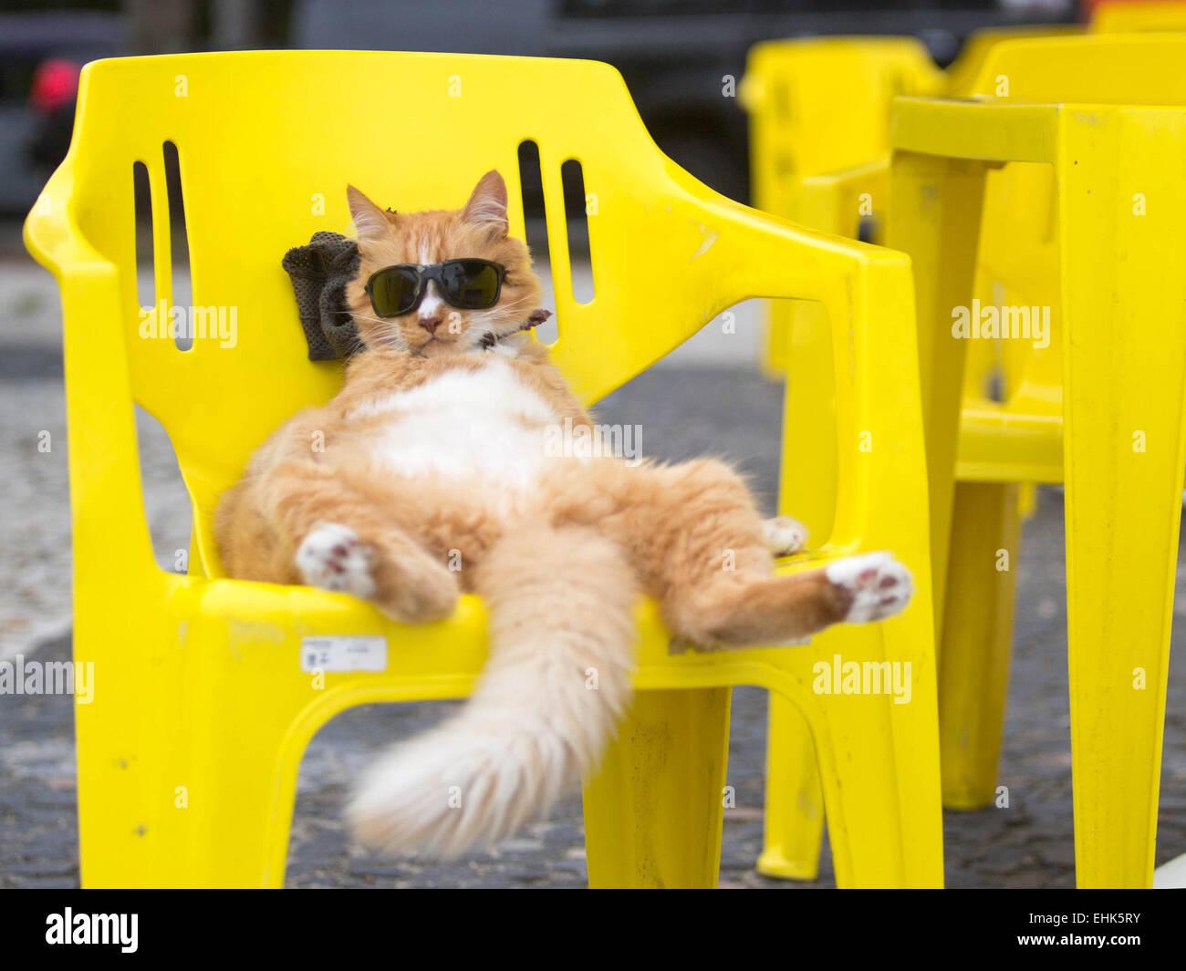 Beijing, Brazil. 14th Mar, 2015. A cat with sunglasses enjoys the sunshine in a chair near the Sao Conrado beach Stock Photo