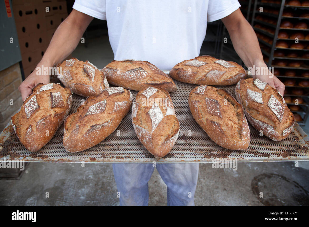 Baker holding a tray of loaves of freshly baked wholemeal bread - Stock Image