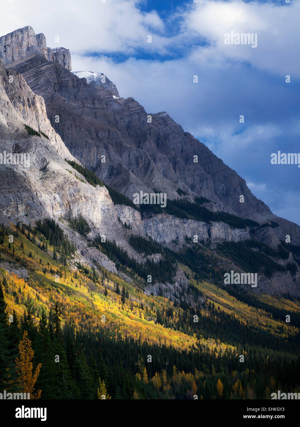Mountainside with fall colored aspen trees. Banff National Park, Alberta, Canada - Stock Image