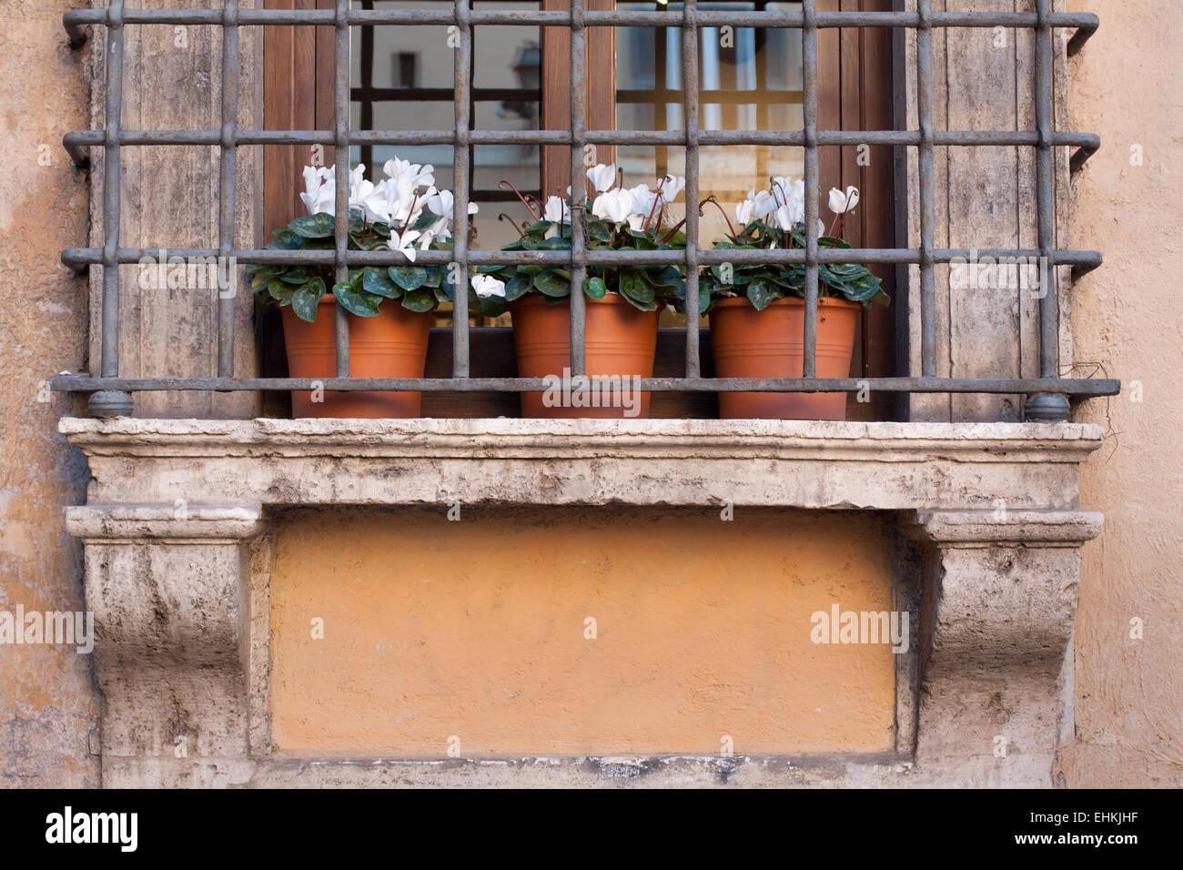 Three flowers in flowerpots on windowsill behind metal lattice in Italy - Stock Image