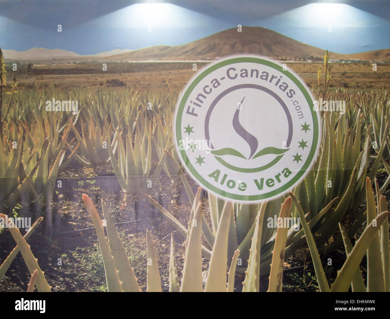 Big wall poster advertising the company  Finca- Canarias involved in Aloe Vera plantation and products, Fuerteventura, - Stock Image