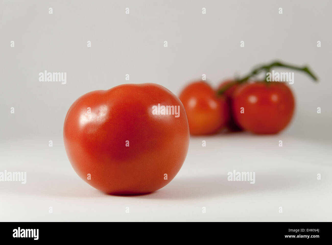 Single ripe plump red tomato backed by blurred grouping of three tomatoes with white background - Stock Image