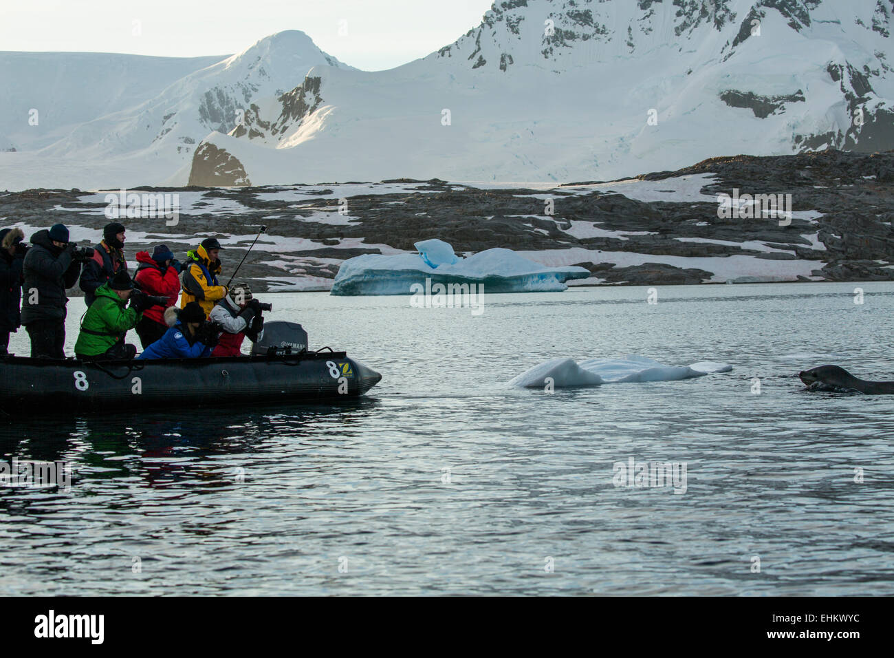 photographers on expedition photographing leopard seal, Pleneau Bay, Antarctica - Stock Image