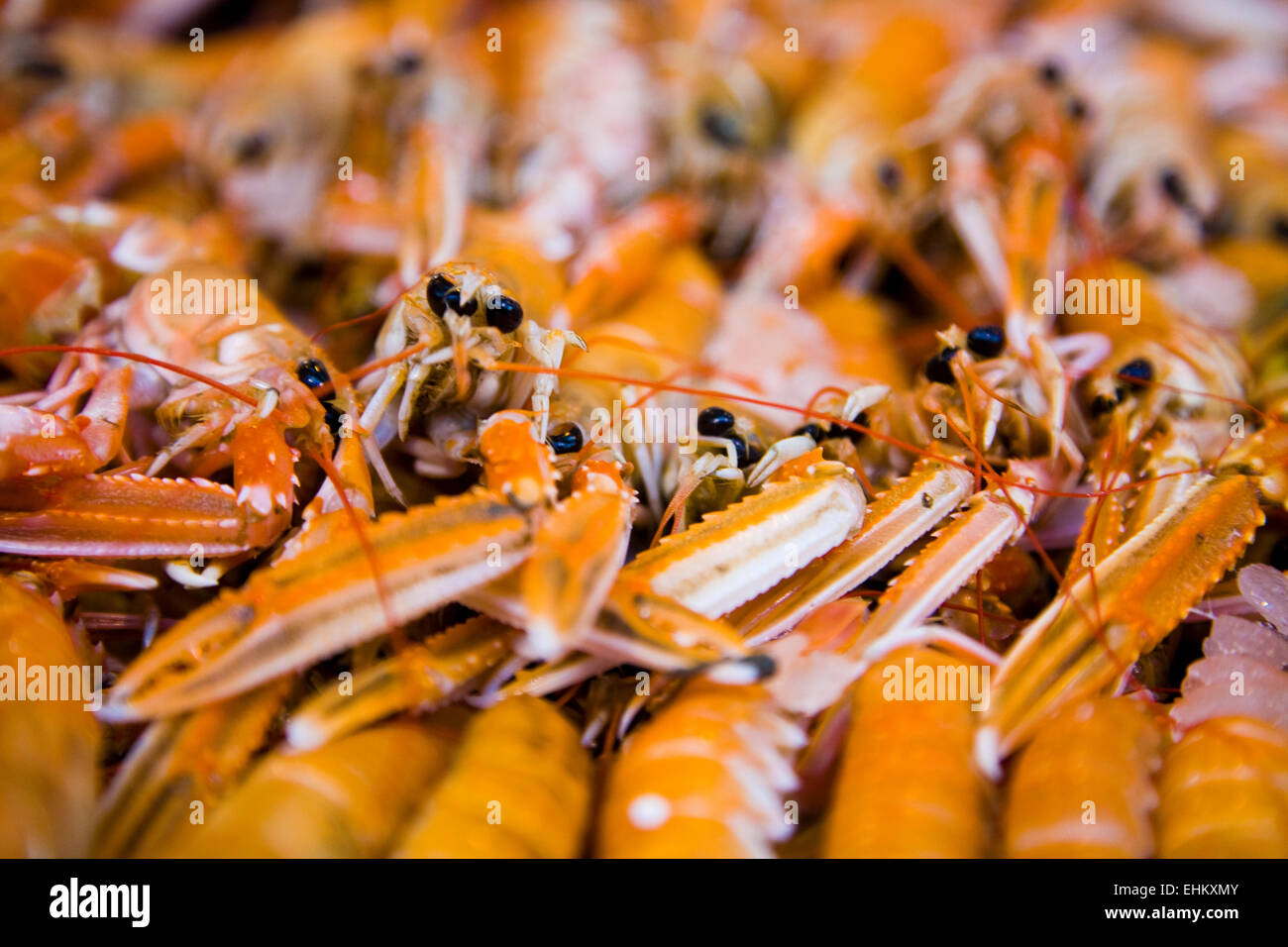 Langoustines in market, England, close up - Stock Image