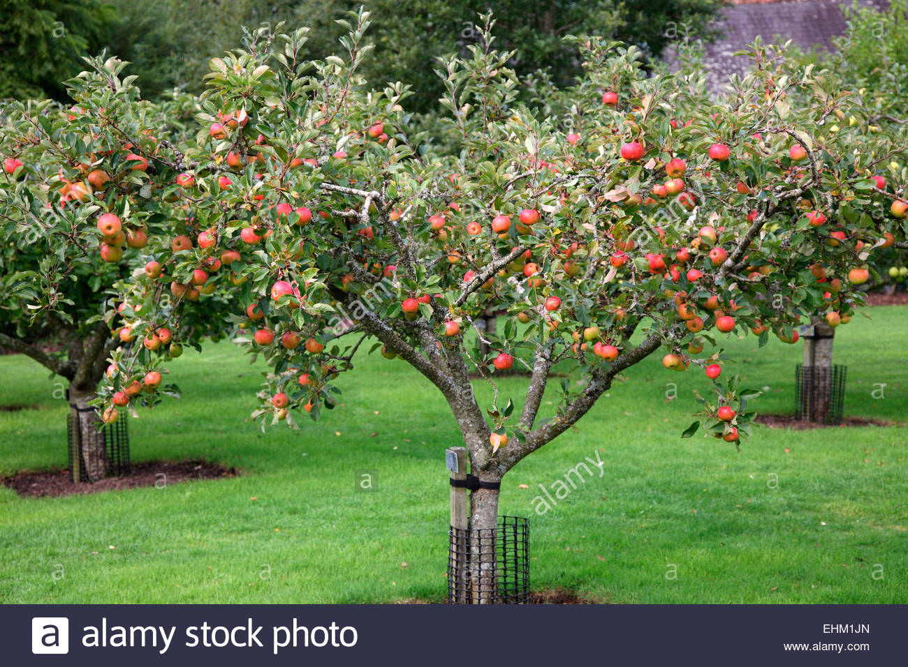 Apple Tree Designs Uk