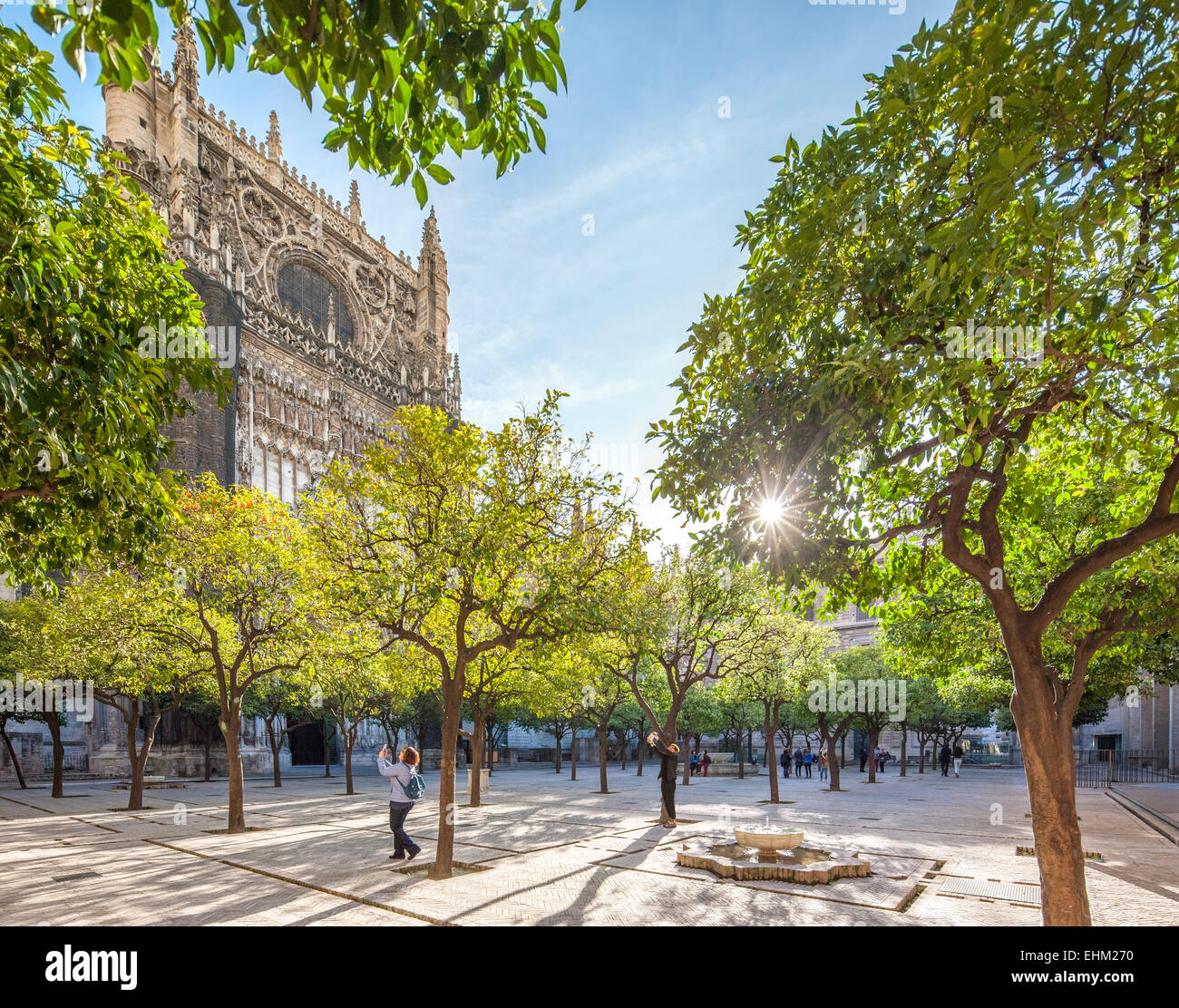 Seville Cathedral patio courtyard with orange trees with oranges and tourists taking pictures. Sevilla Catedral - Stock Image