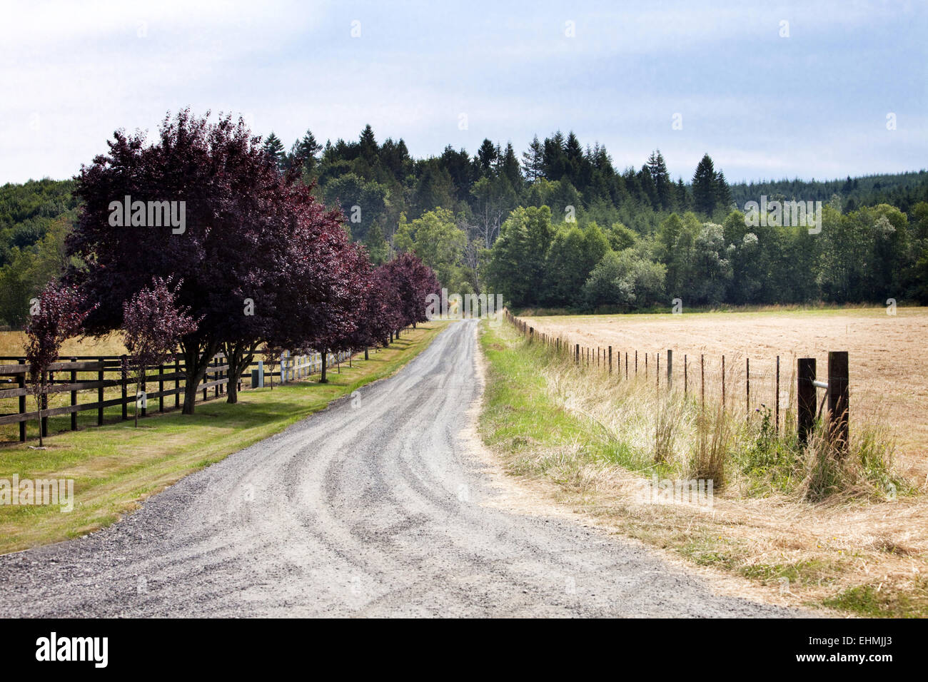 Dirt road between grass fields in rural landscape - Stock Image
