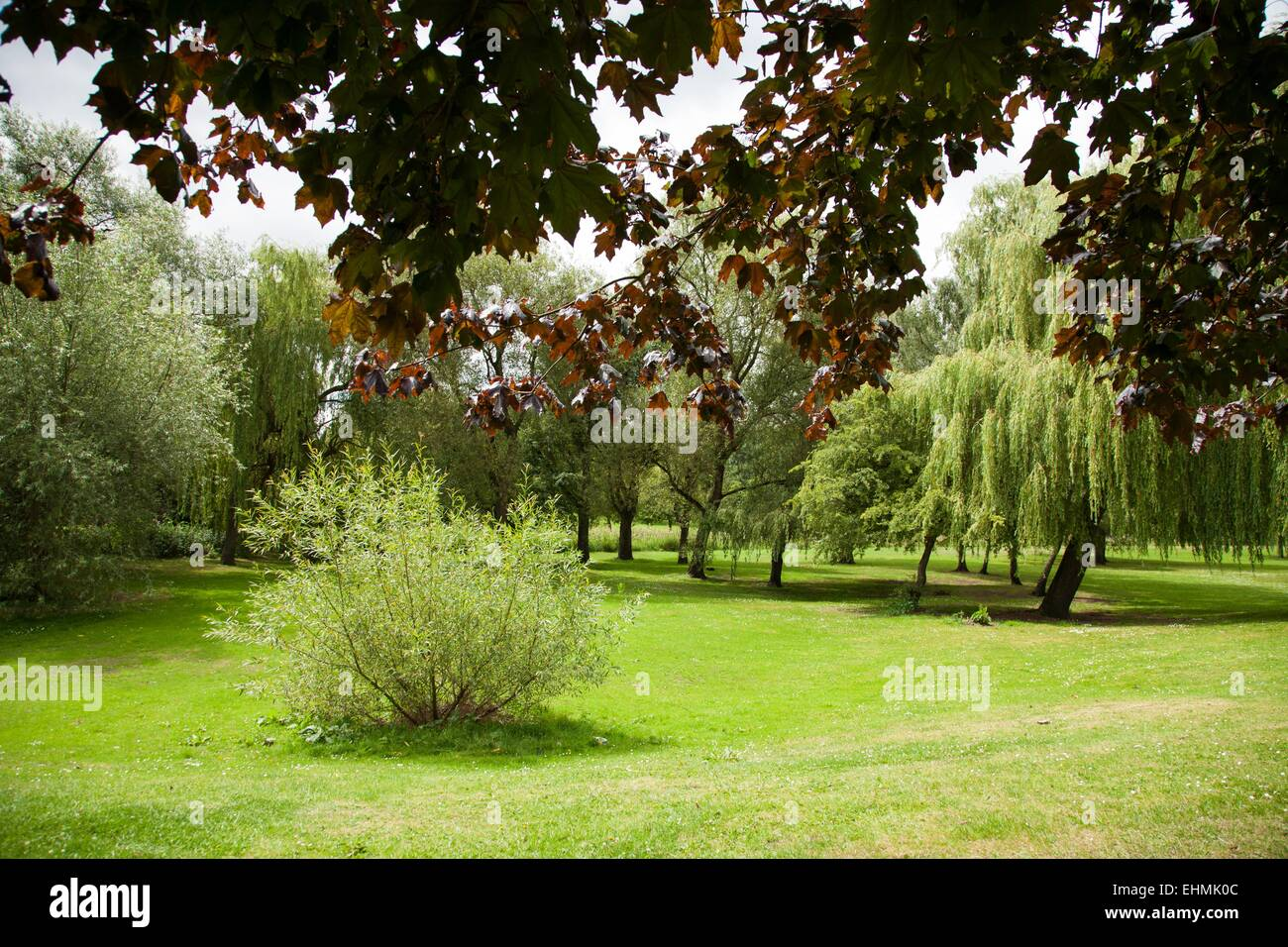 Cole End Park Nature Reserve, Coleshill, West Midlands - Stock Image