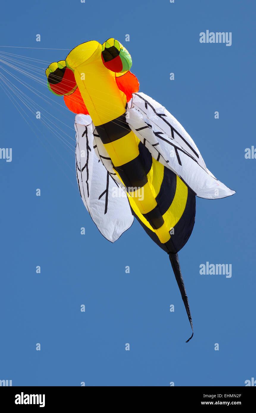 Kite flying, Barmouth Kite Festival - Stock Image