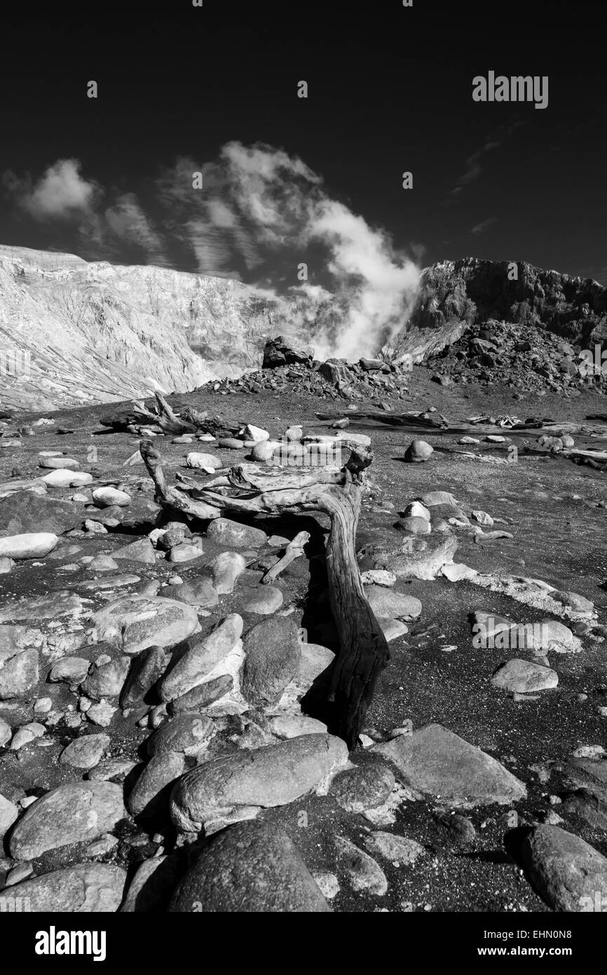 Old tree trunk and rocks on White Island volcano in New Zealand. Color version EHN0N9 - Stock Image