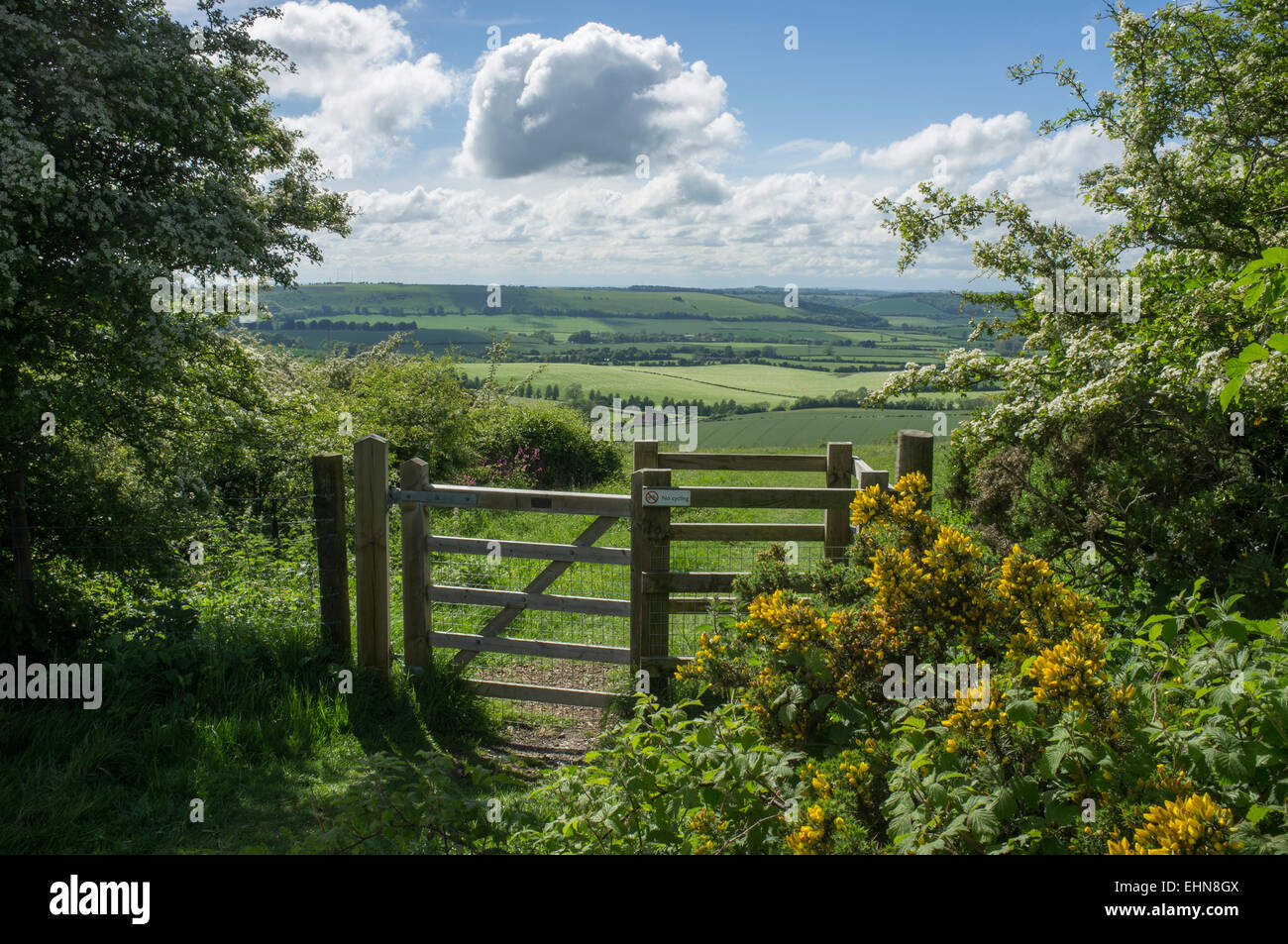 View towards East Meon from Butser Hill in the South Downs National Park, Summer sunshine and clouds Stock Photo