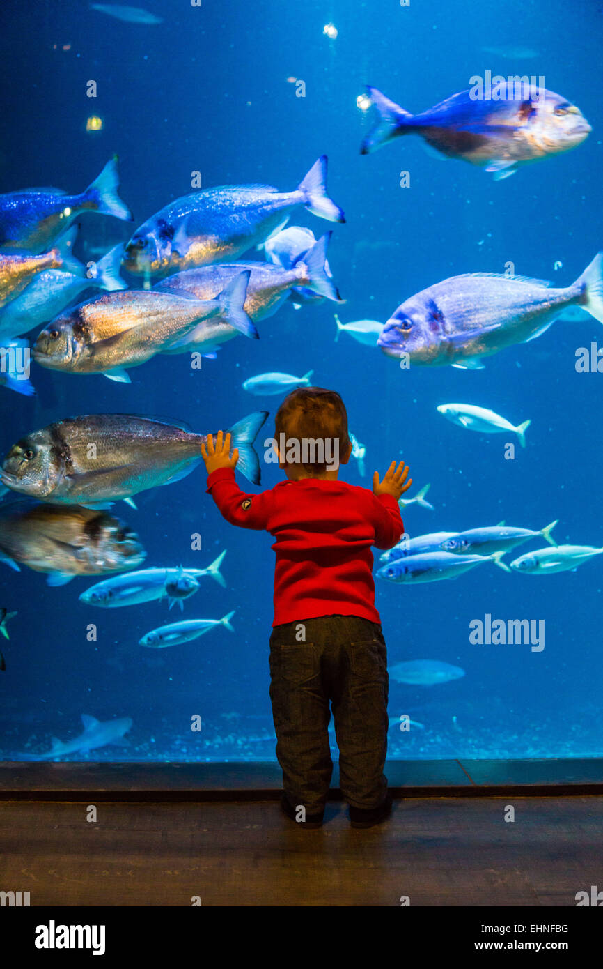 Baby boy watching fishes in an aquarium. - Stock Image