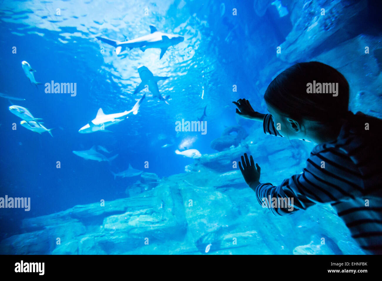 7 year-old girl watching fishes in an aquarium. Stock Photo
