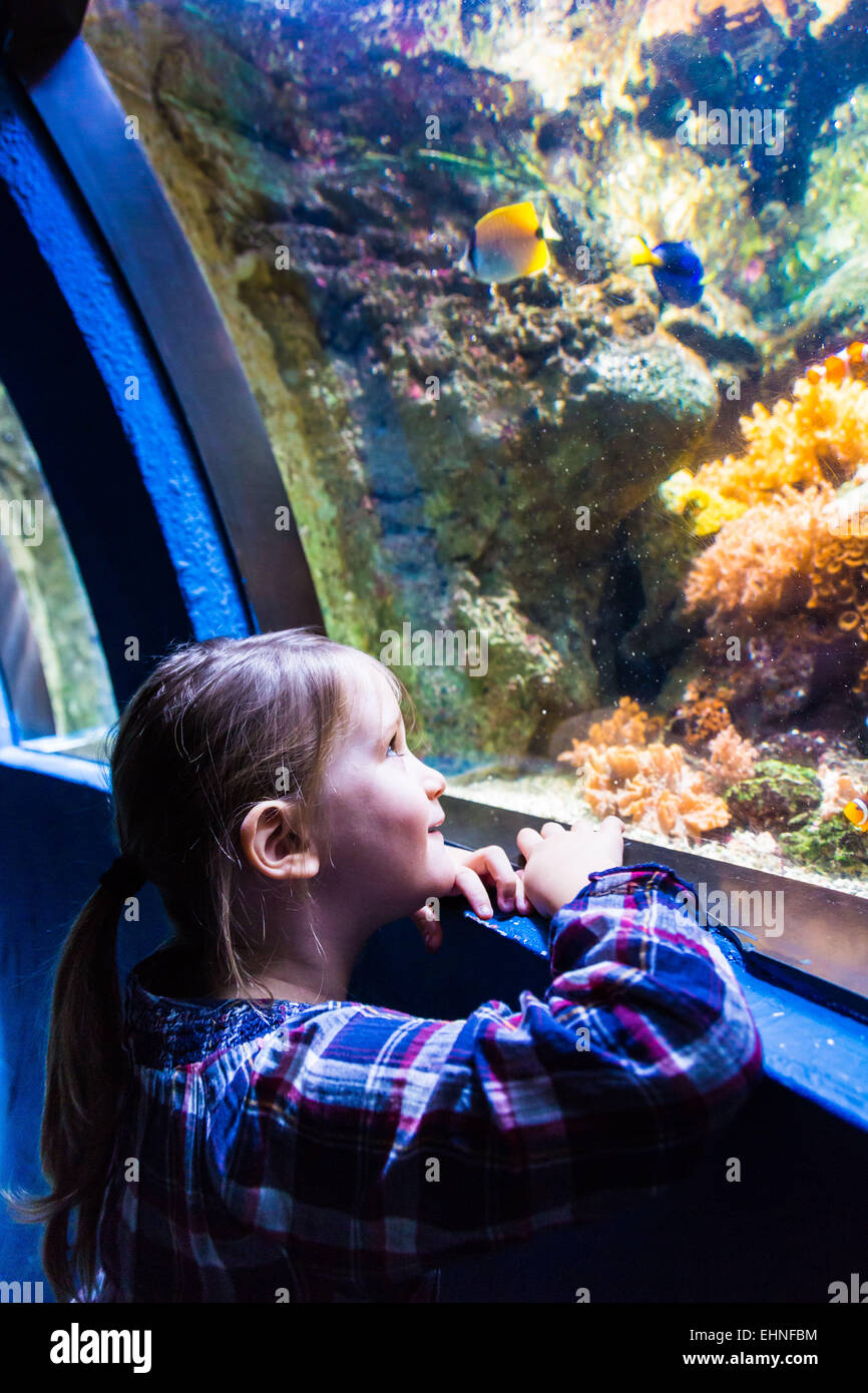 5 year-old girl watching fishes in an aquarium. Stock Photo