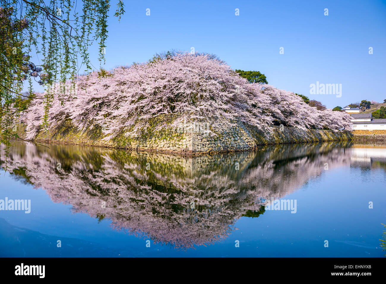 Hikone, Japan at the castle moat during spring season. - Stock Image