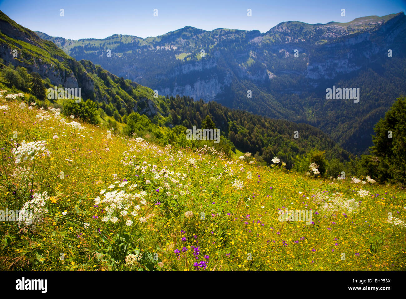 Wildflowers blooming in Chartreuse regional natural park, near Saint Pierre de Chartreuse, France - Stock Image