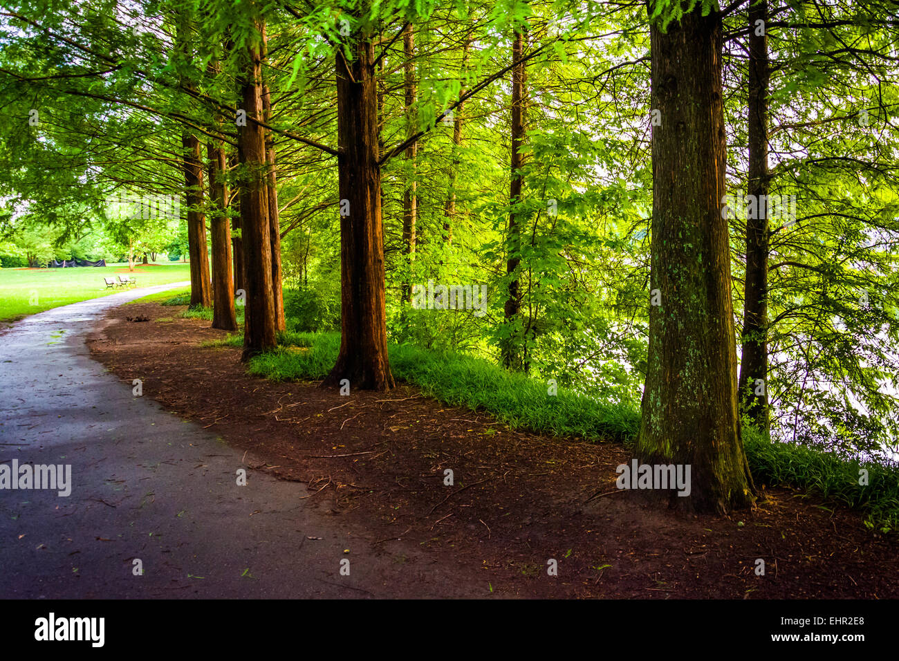 Trees along a path at Piedmont Park in Atlanta, Georgia. - Stock Image