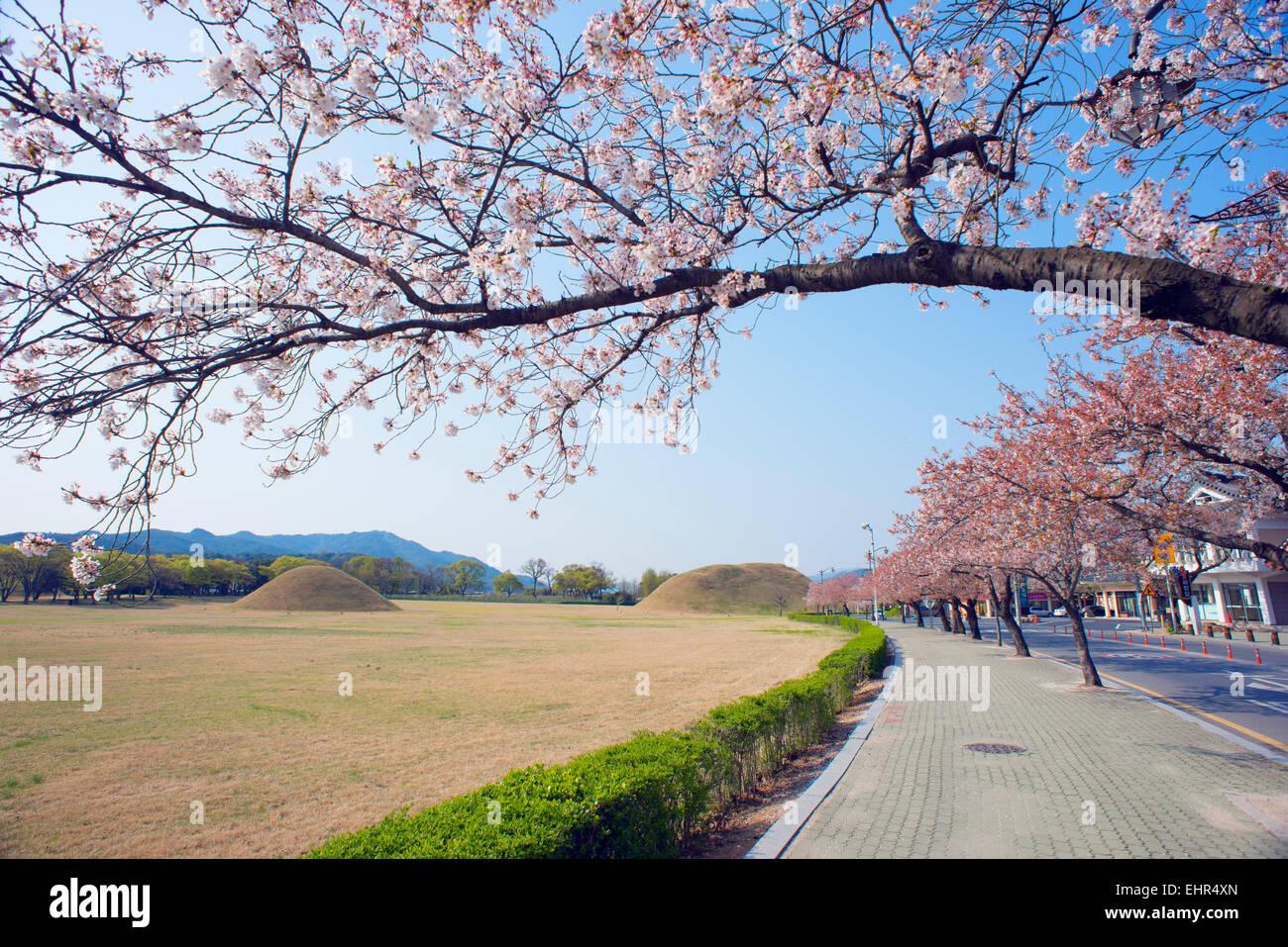 Asia, Republic of Korea, South Korea, Gyeongsangbuk-do, Gyeongju, Royal Tombs burial mounds, Unesco site Stock Photo