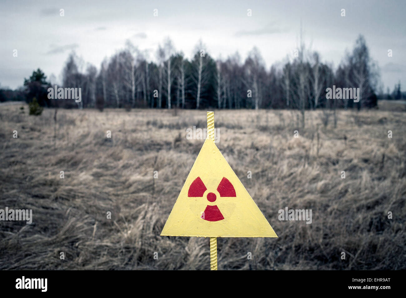 Wooded area in the contaminated zone between Pripyat and Chernobyl, Ukraine - Stock Image