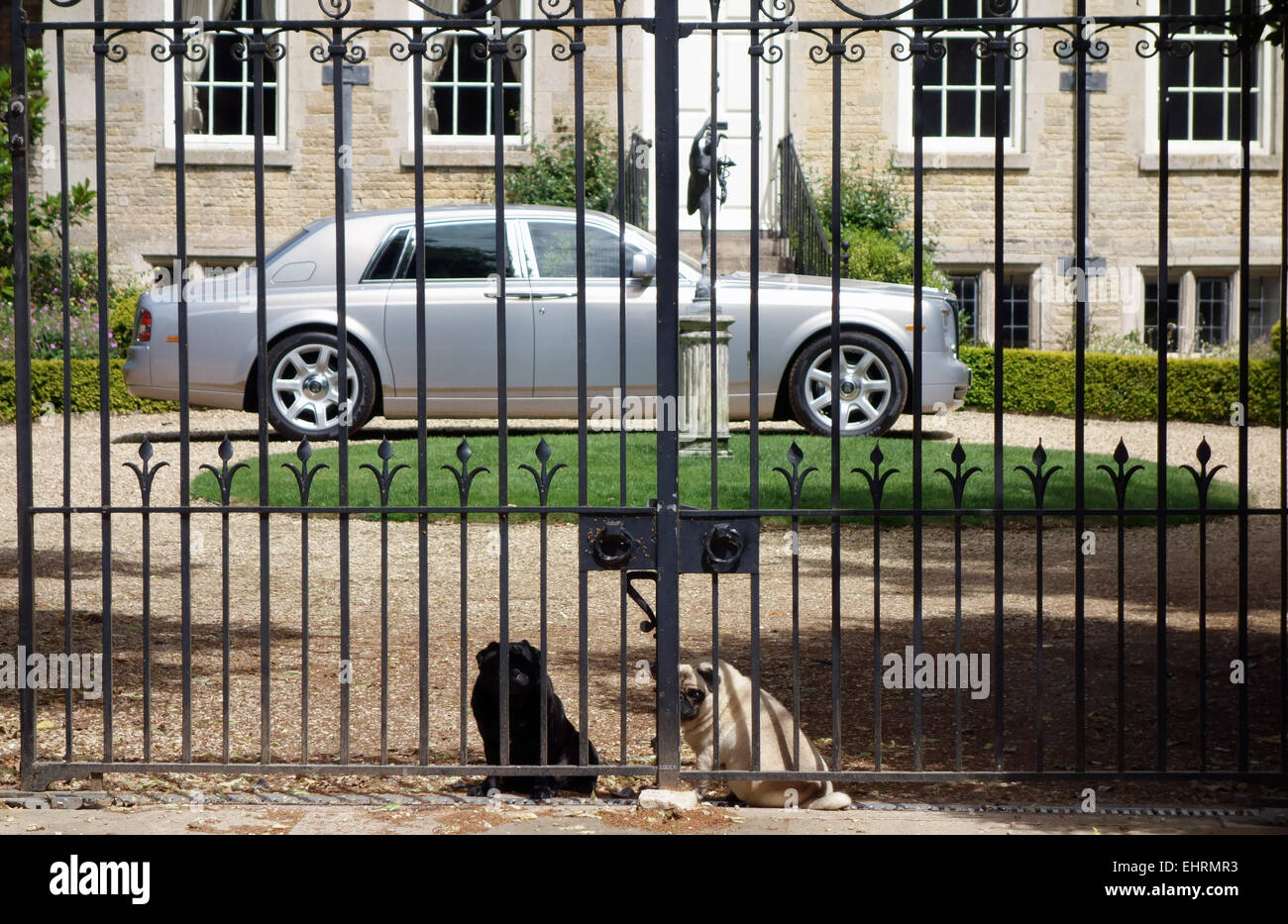 two pugs sitting by the gates of their home - Stock Image
