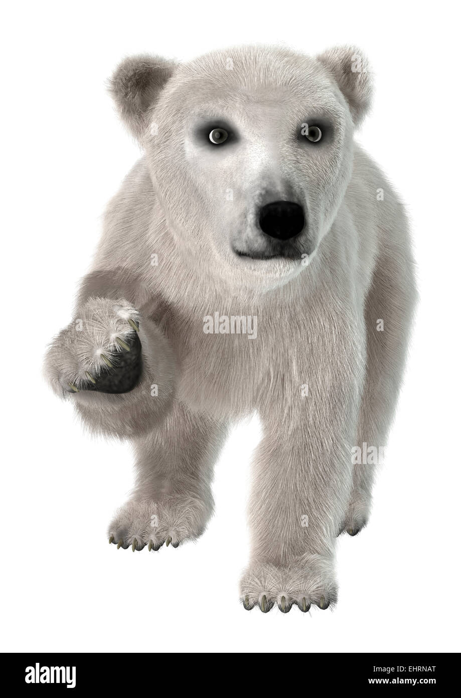 2d6d7bd35cc 3D digital render of a cute polar bear isolated on white background - Stock  Image