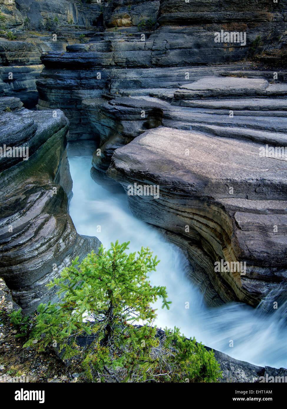 Stream in Mystiya Canyon. Banff National Park, Alberta, Canada - Stock Image