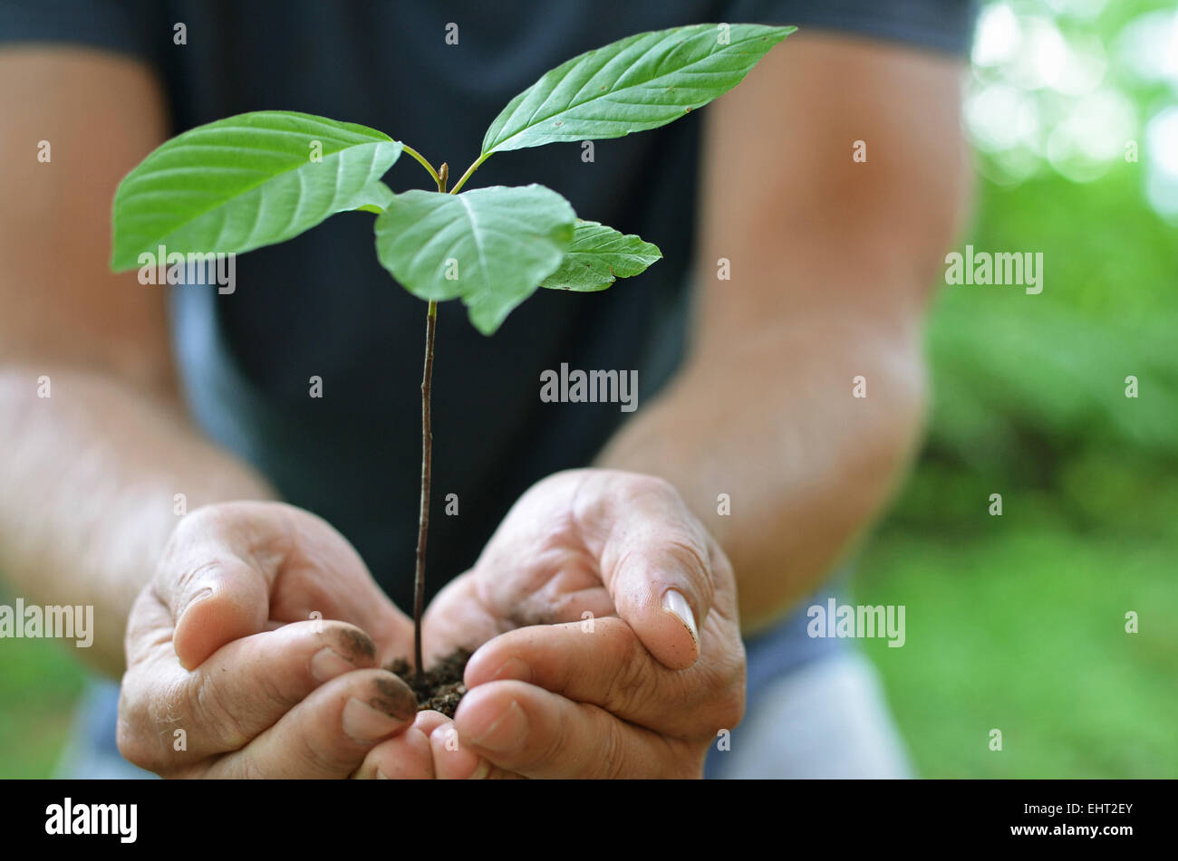 Safe Nature - Stock Image