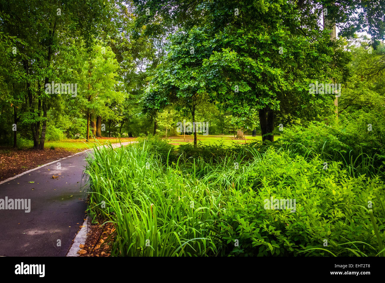 Trees and plants along a path in Piedmont Park, Atlanta, Georgia. - Stock Image