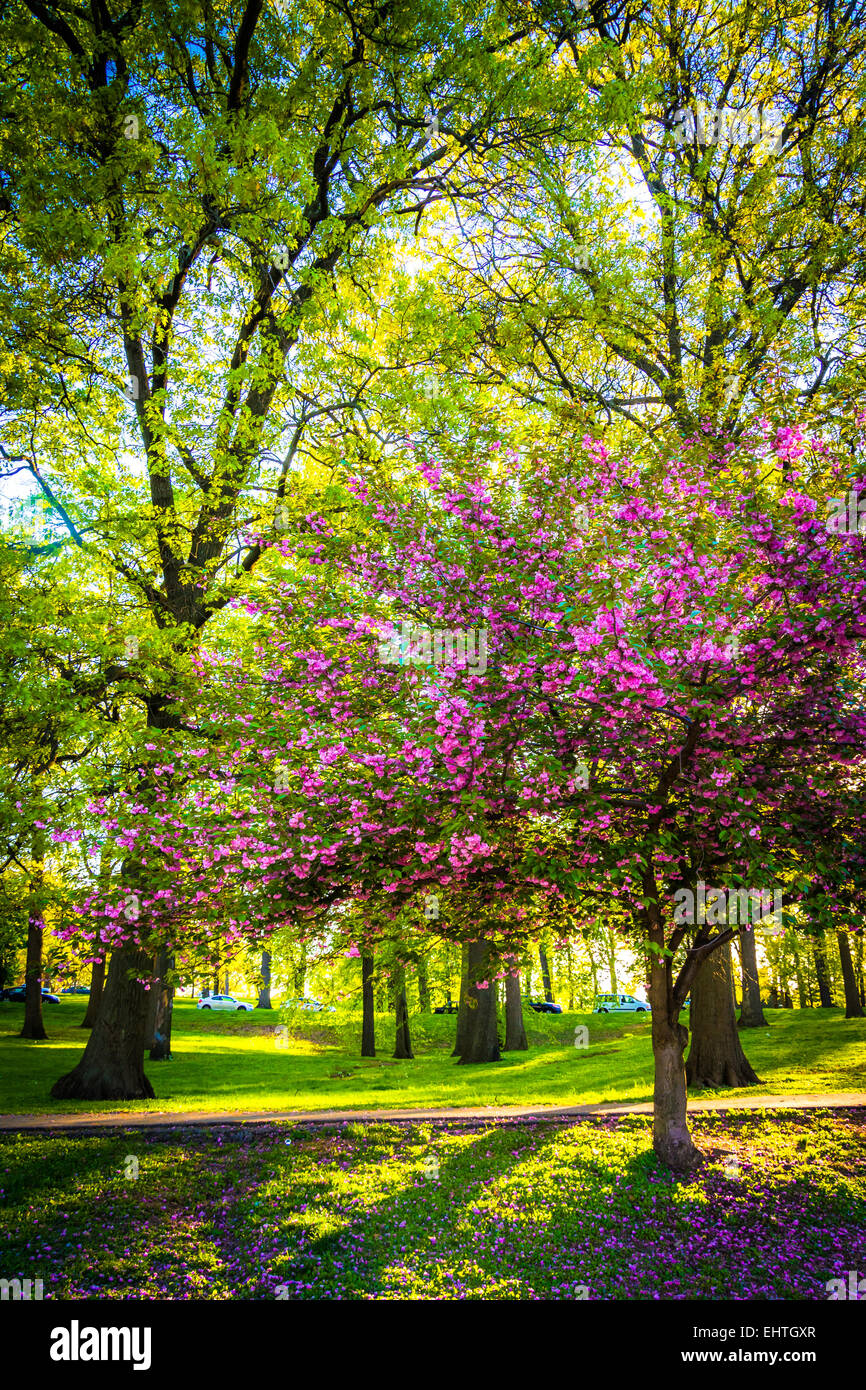 Colorful trees in Druid Hill Park, Baltimore, Maryland Stock Photo ...