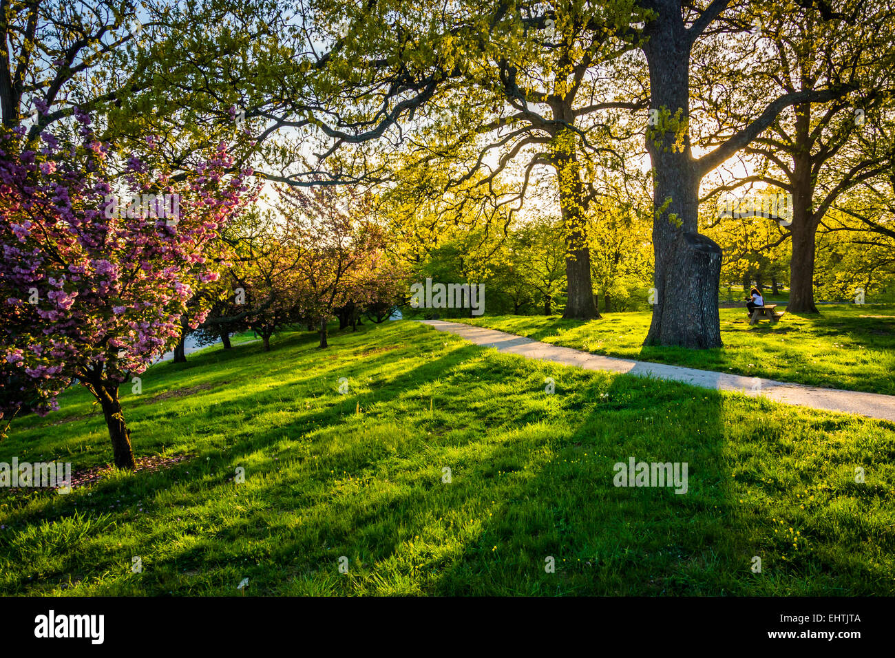 Evening light on colorful trees in Druid Hill Park, Baltimore Stock ...