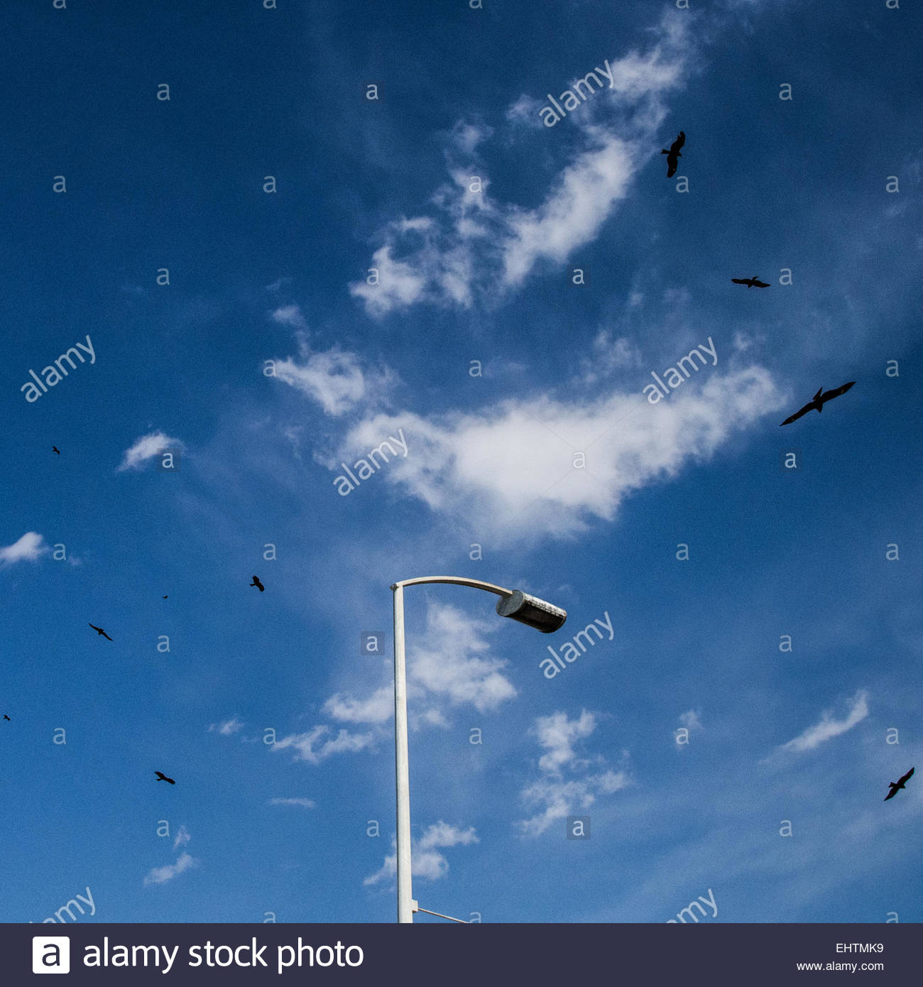 Japanese hawks circle in the sky above a streetlight at Enoshima.Stock Photo