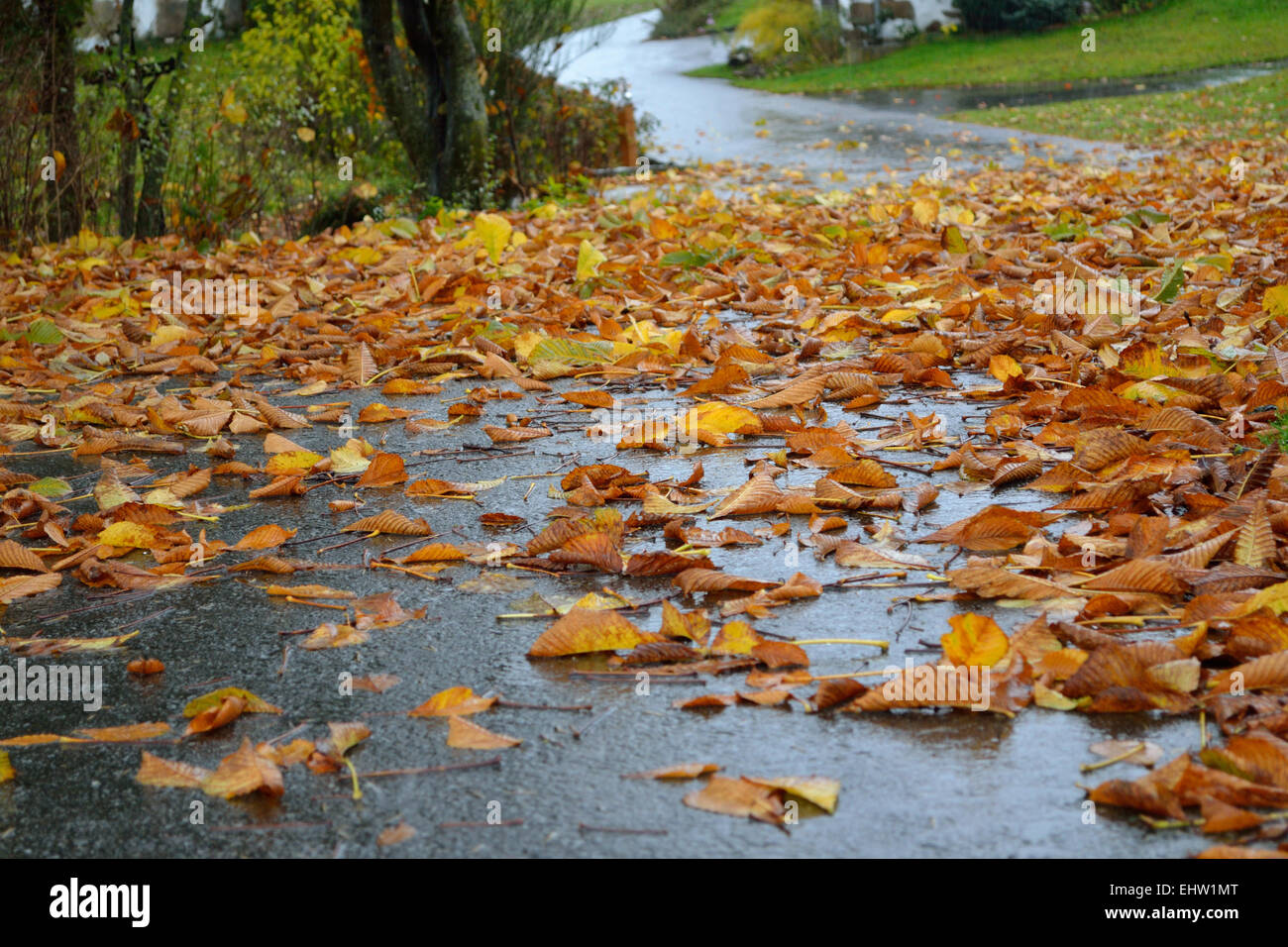 Danger of slipping on leaves on the road - Stock Image