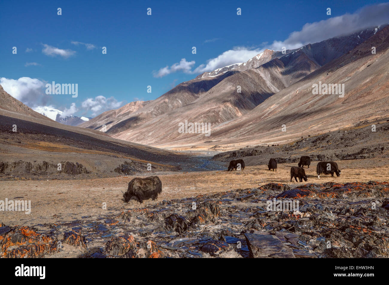 Herd of yaks in picturesque Pamir mountains in Tajikistan - Stock Image