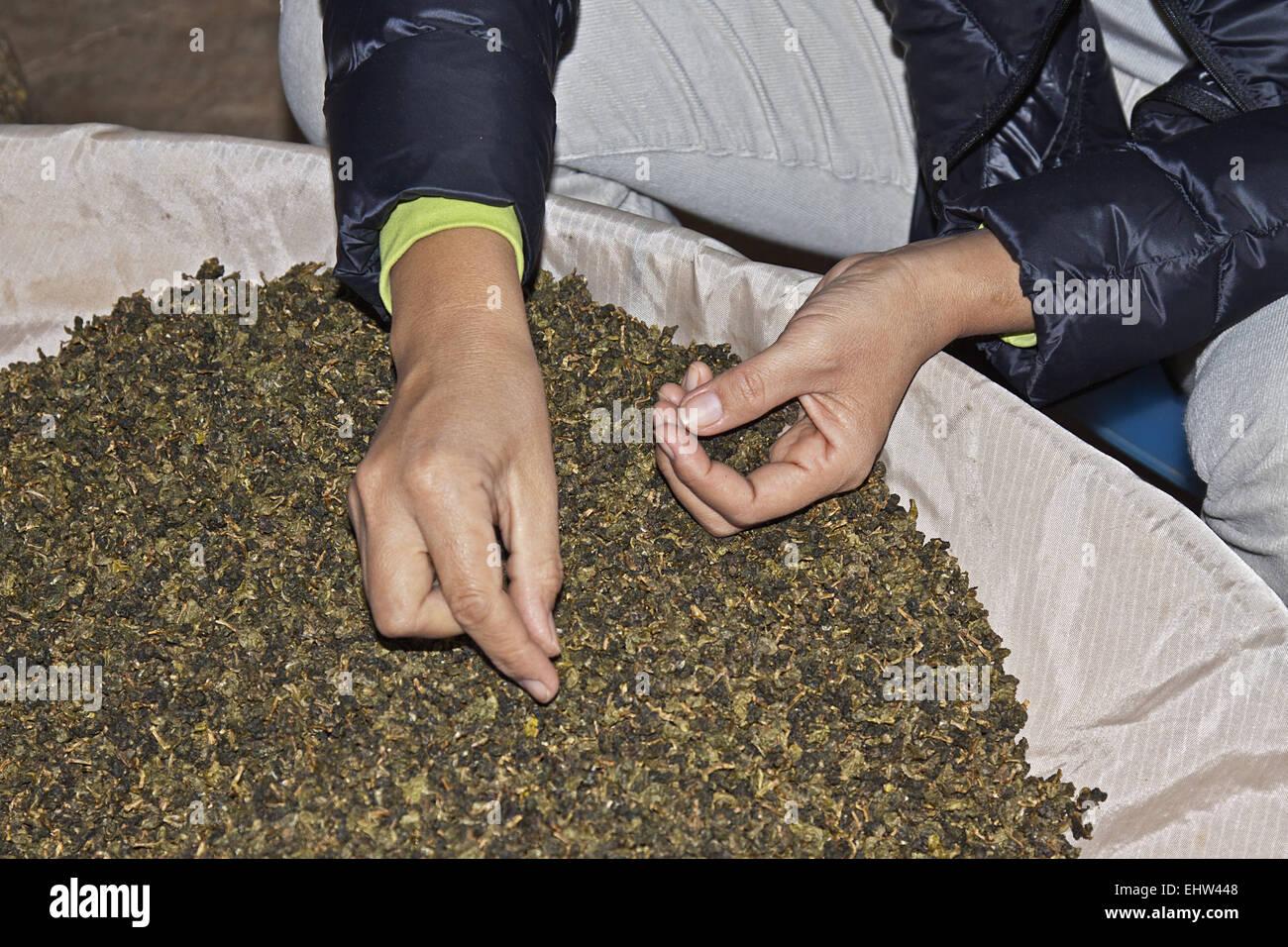 Oolong tea - Stock Image