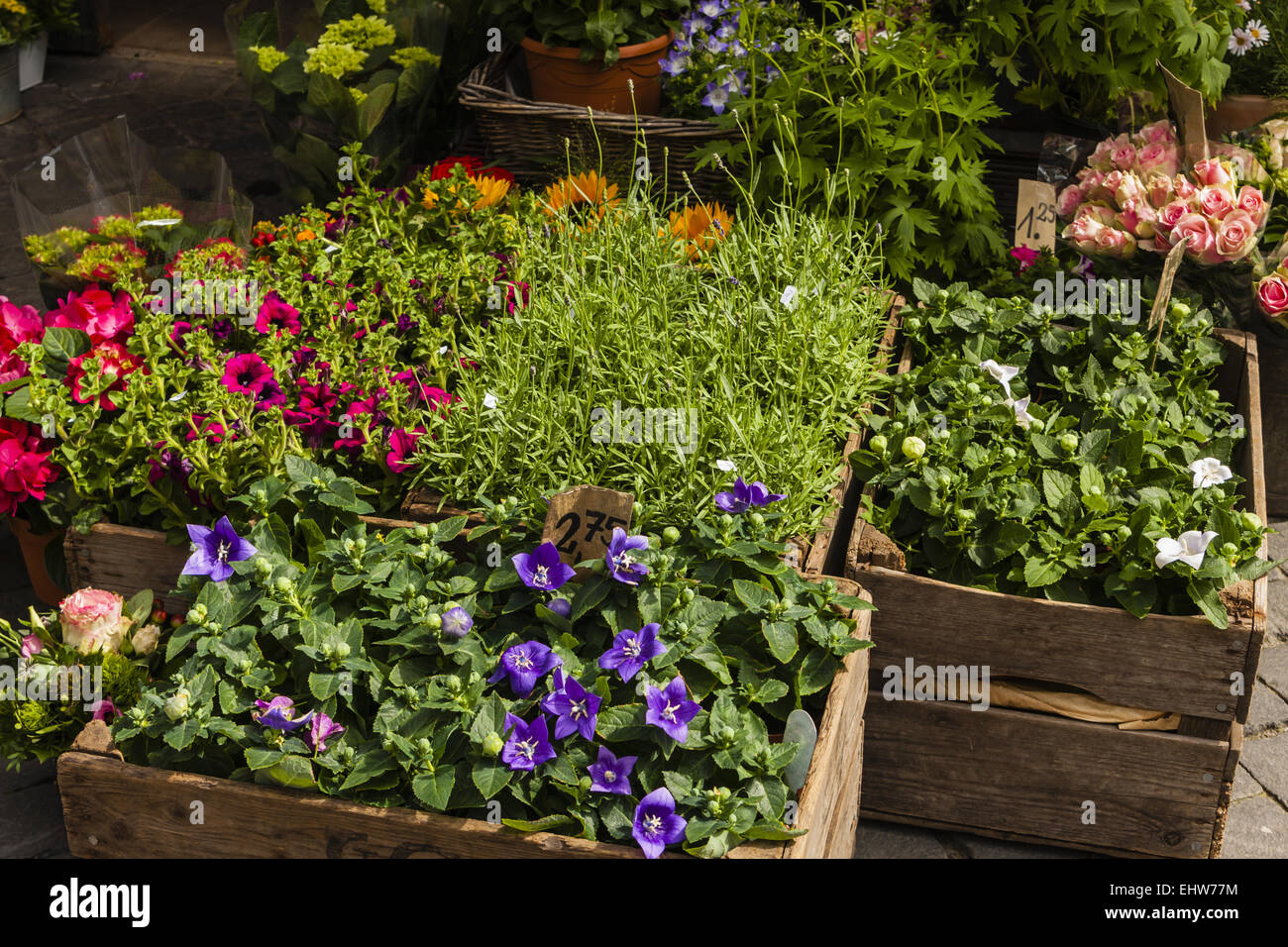 Flower-Shop - Stock Image