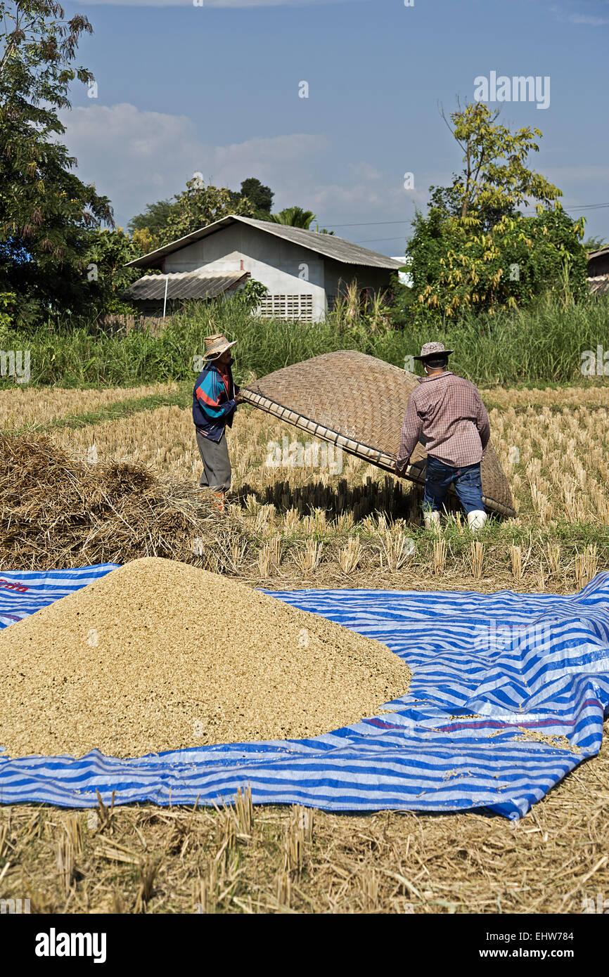 Rice - Stock Image