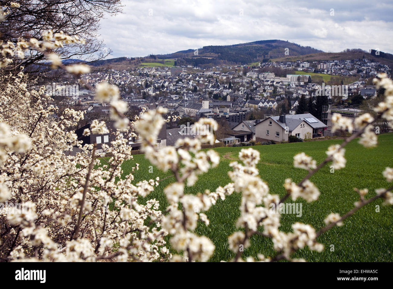 City view from Meschede with hawthorn hedge. - Stock Image