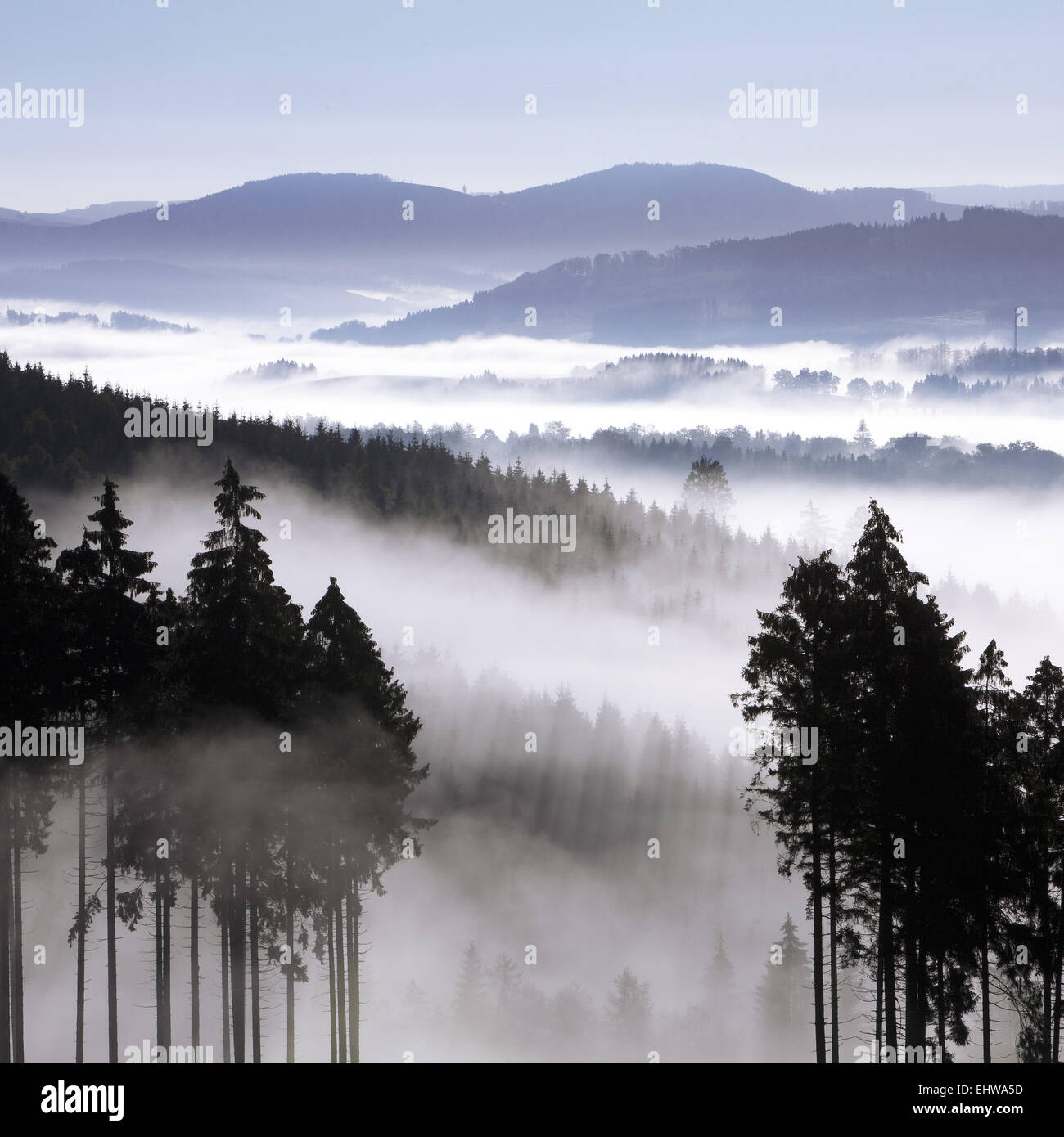 Early morning mist in the Arnsberg Forest. - Stock Image