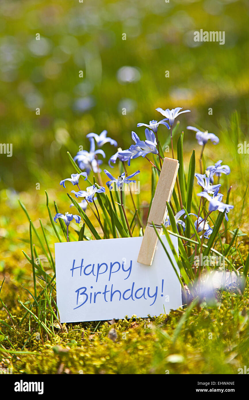 Happy Birthday With Spring Flowers Stock Photo 79847866 Alamy
