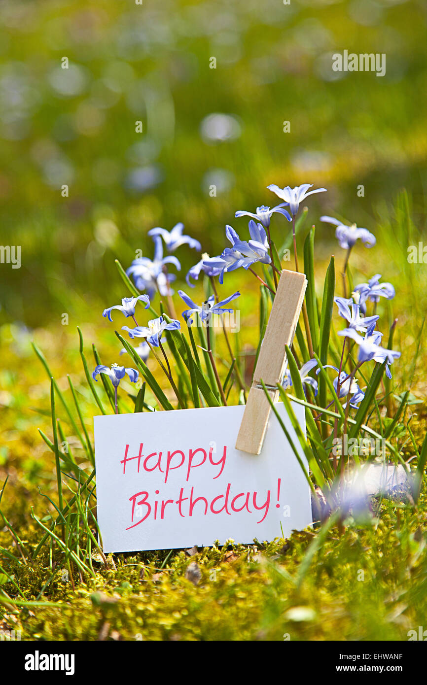 Happy Birthday With Spring Flowers Stock Photo 79847867 Alamy