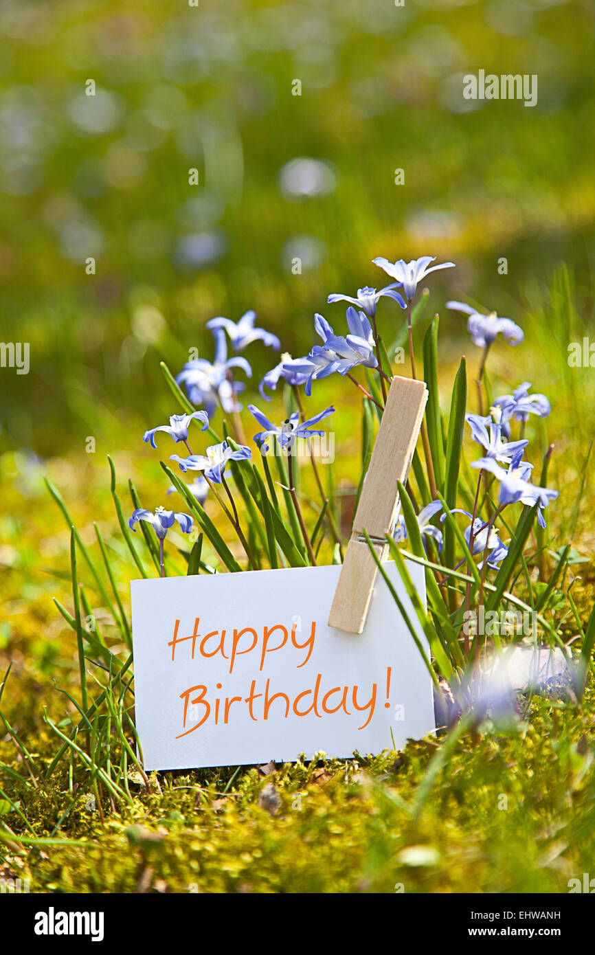 Happy Birthday With Spring Flowers Stock Photo 79847869 Alamy