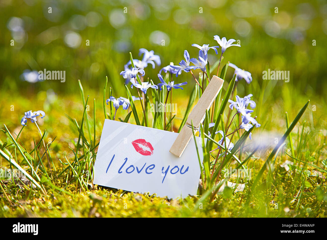 Feng Shui Spring Flowers Stock Photos Feng Shui Spring Flowers