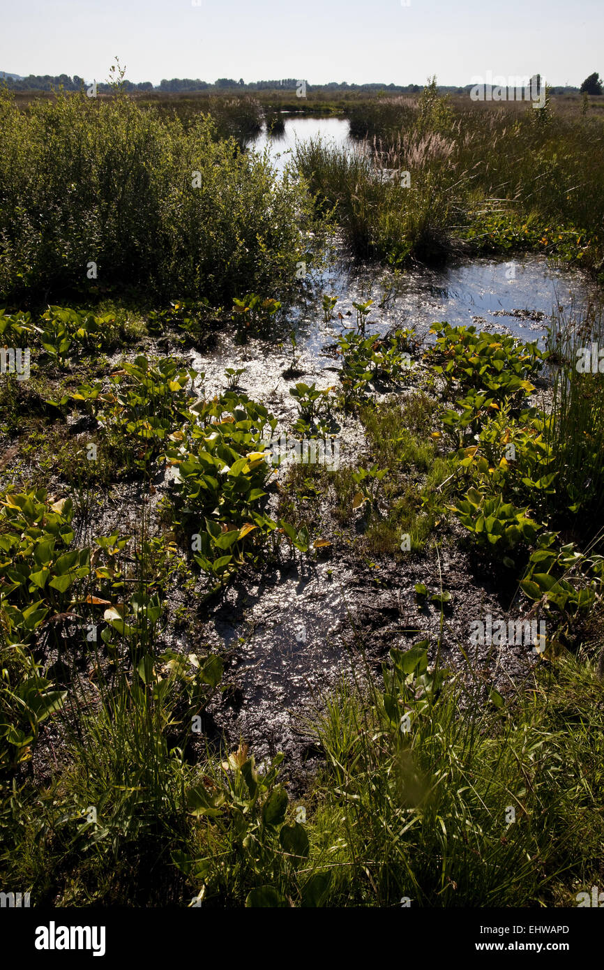 The large peat bog in Luebbecke in Germany. - Stock Image