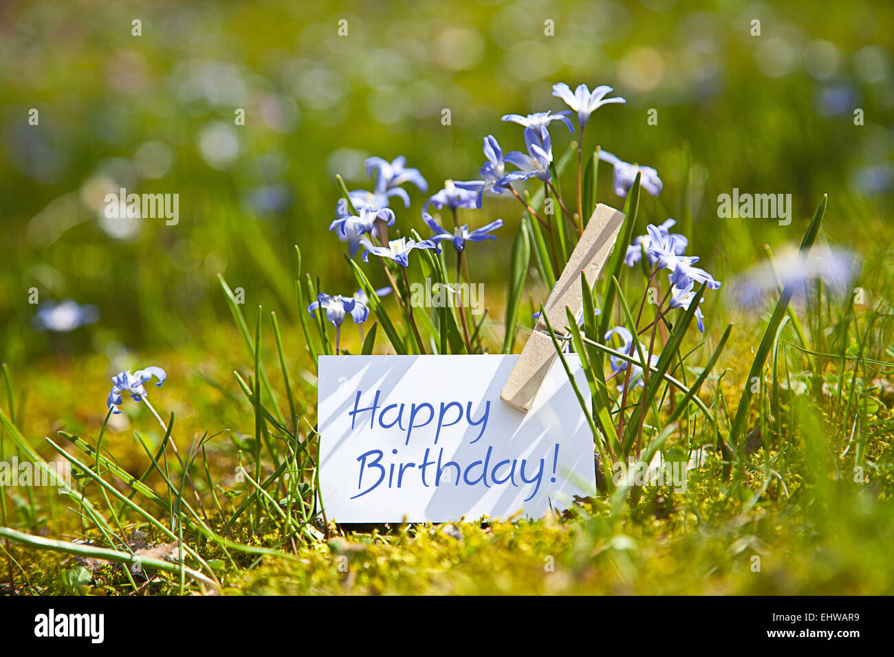 Happy Birthday With Spring Flowers Stock Photo 79847917 Alamy