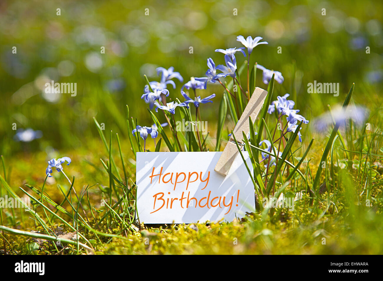 Happy birthday with spring flowers stock photo 79847918 alamy happy birthday with spring flowers izmirmasajfo
