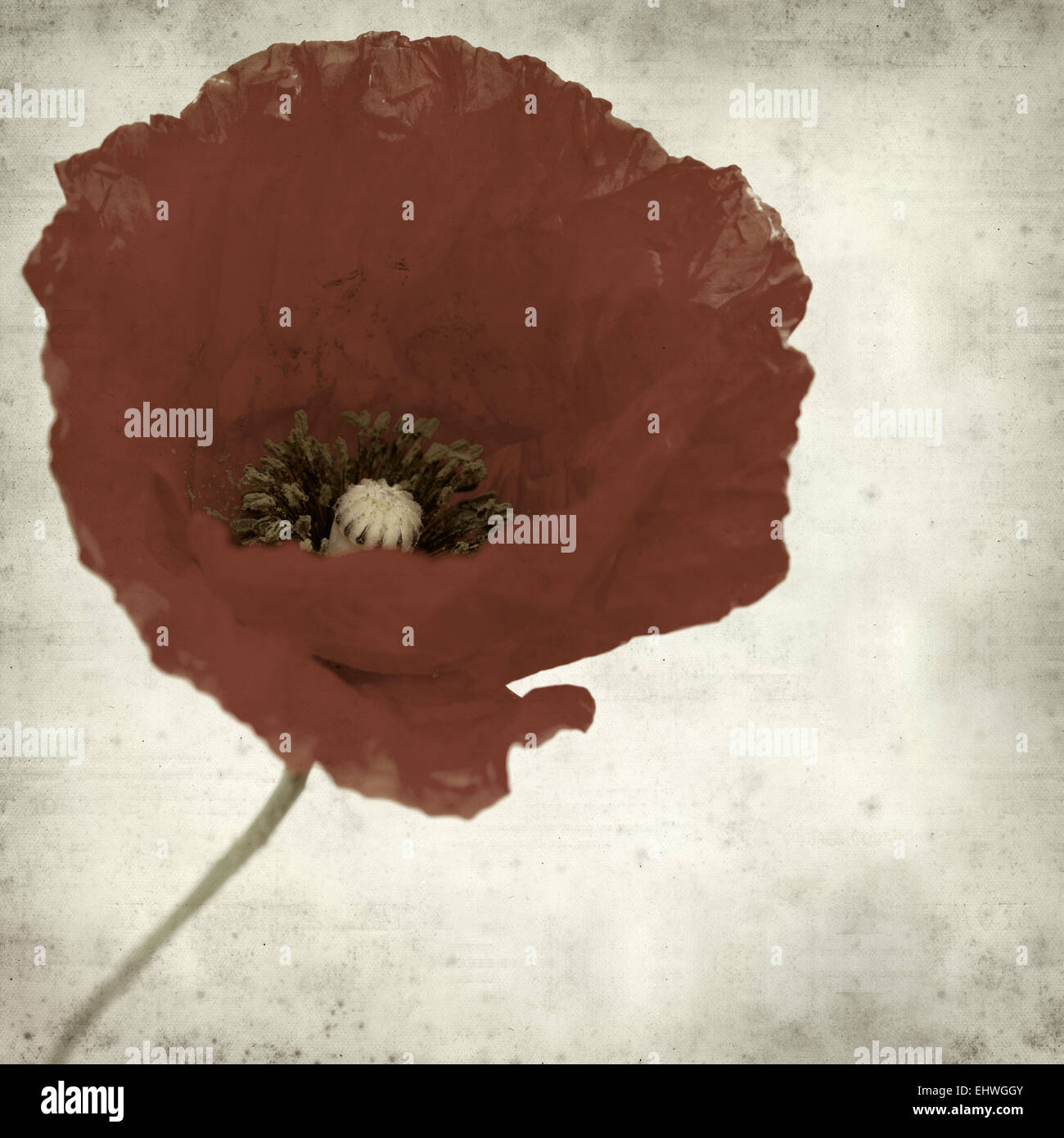 Textured Old Paper Background With Red Poppy Flower Stock Photo
